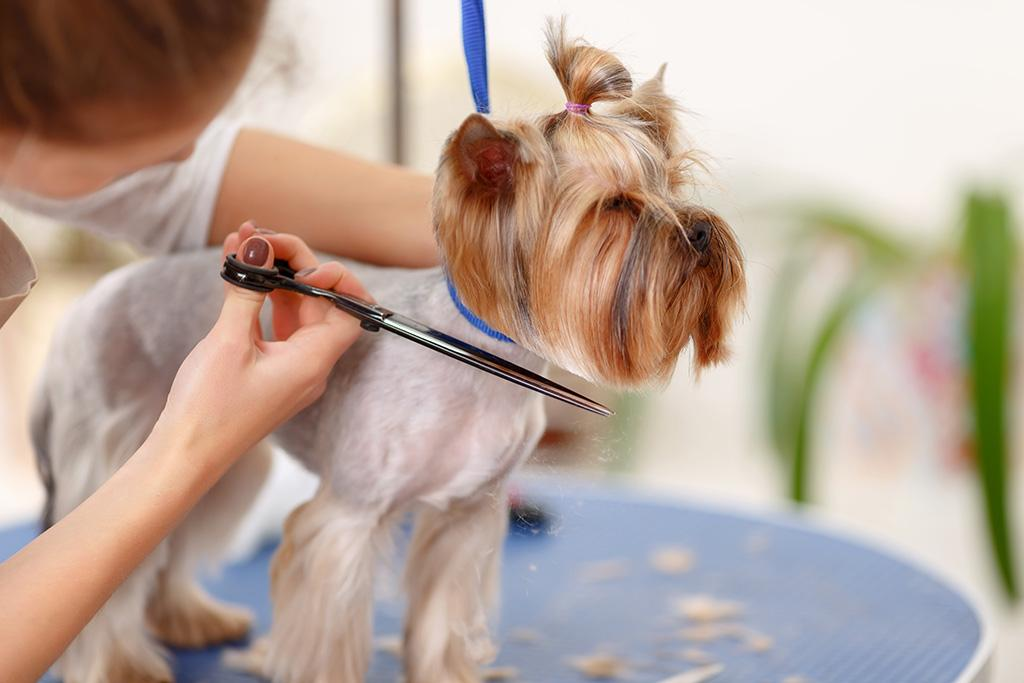 Rely On Us for Pet Grooming Drop-Off in Denver, CO