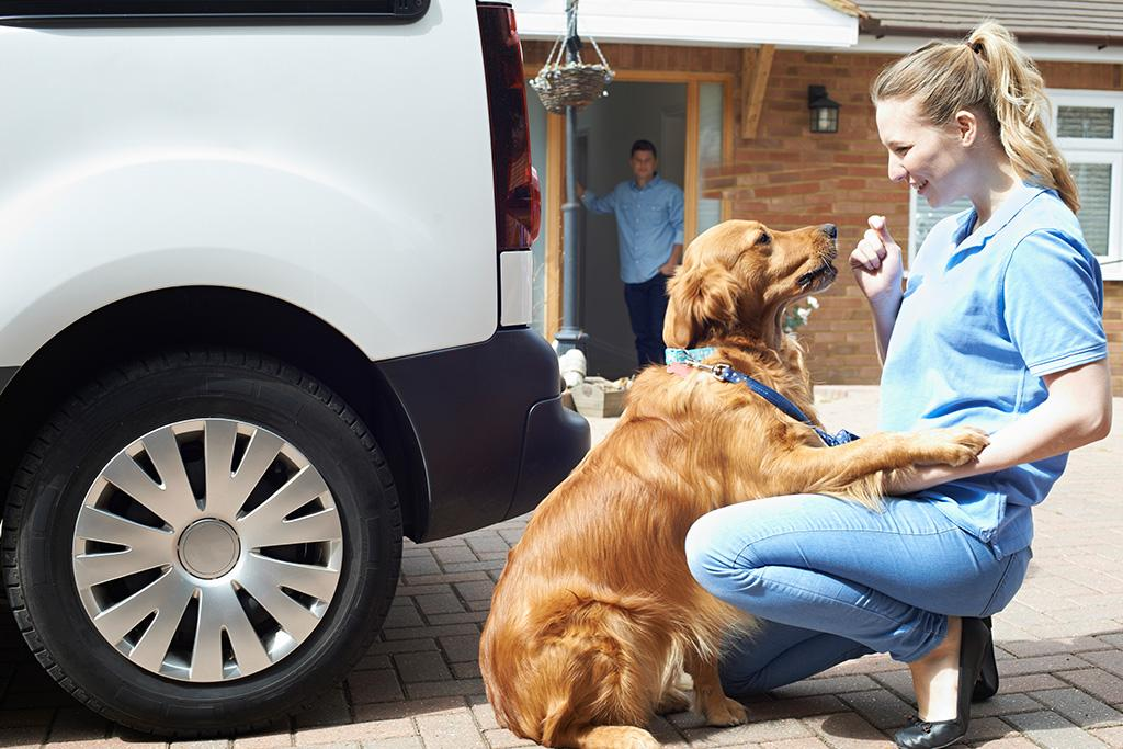 Caring Pet Transportation Services in Denver, CO